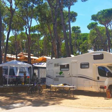 Parcelas y pinos del camping