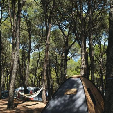 Parcelas con sombra de los pinos en Camping Interpals
