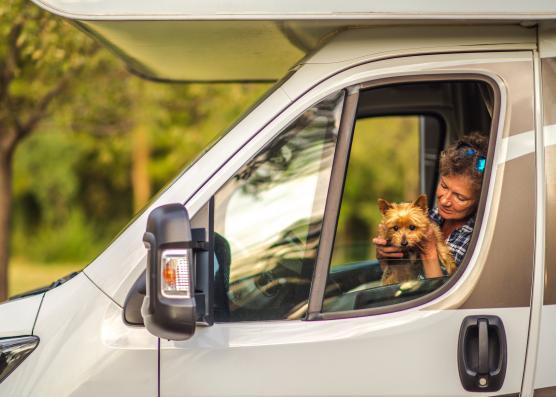 Gos en autocaravana
